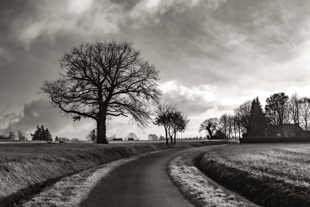 Country Walk... by vignouse