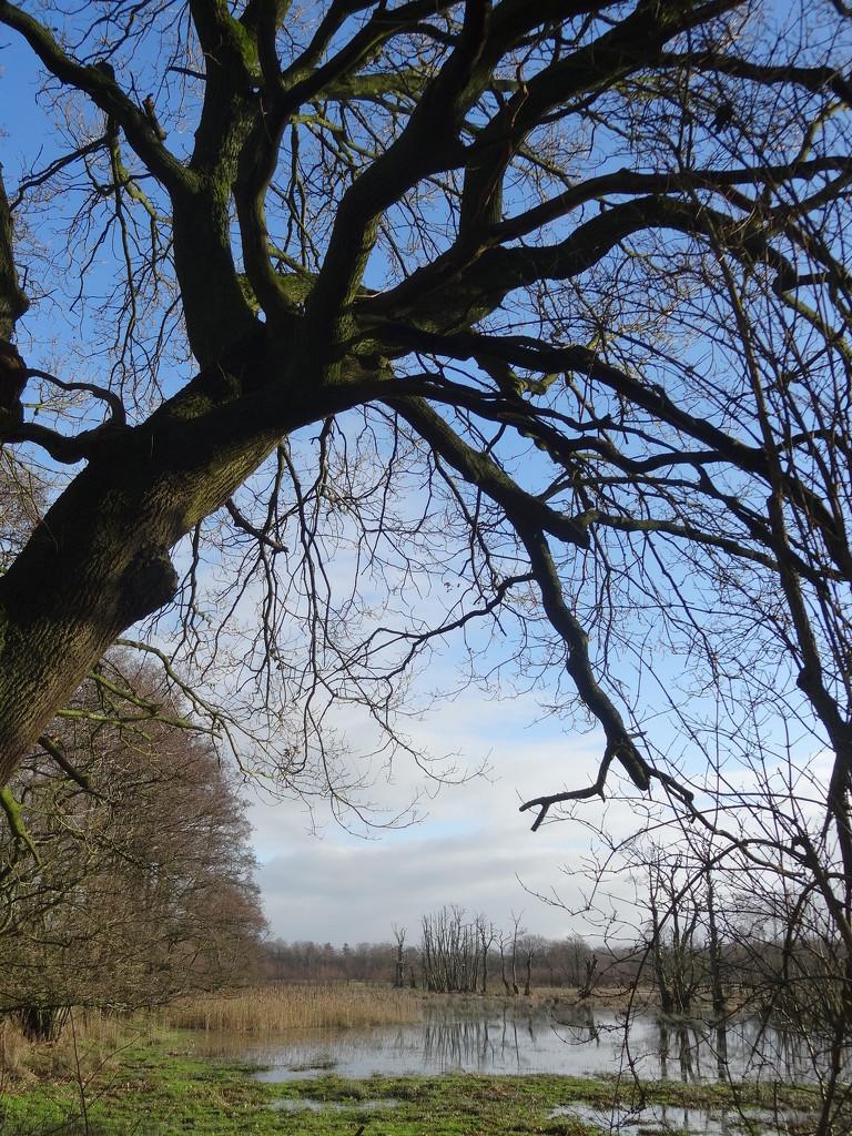 branches by gijsje