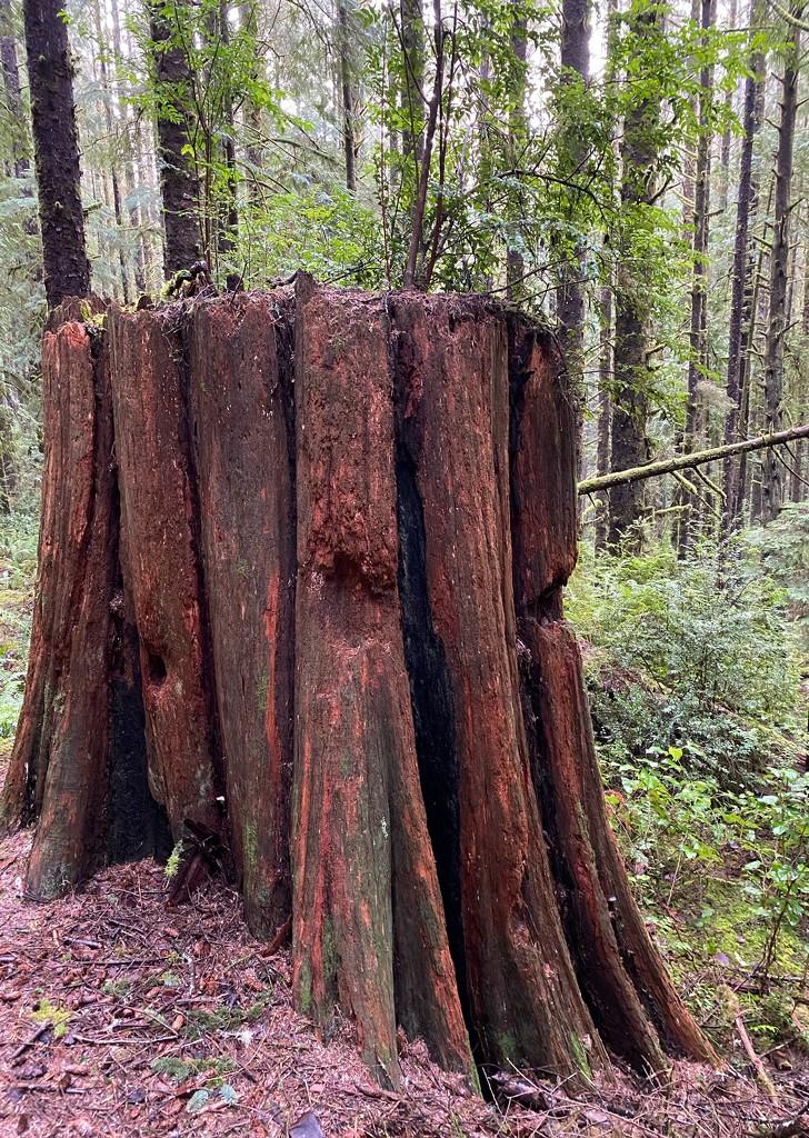 Stump by jgpittenger