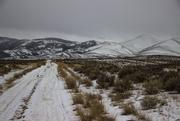 3rd Jan 2021 - Morning Snow