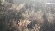 4th Jan 2021 - My wild little garden...