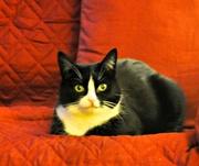 3rd Jan 2021 - Portrait of a cat