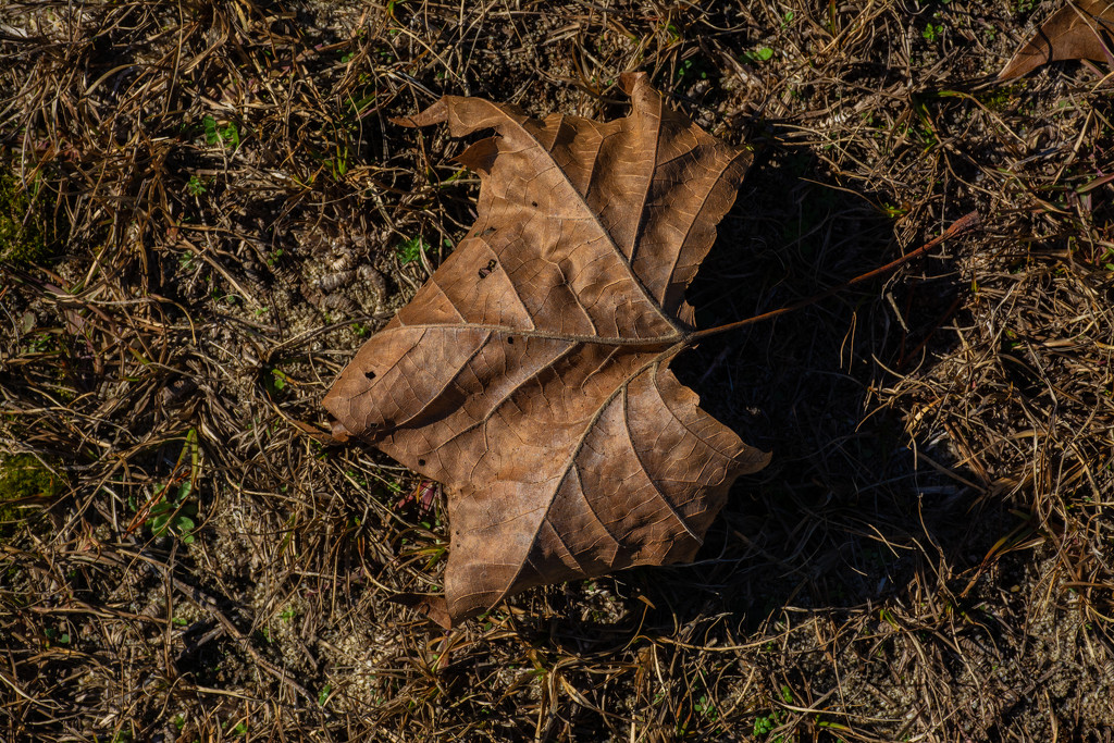 Brown on brown... by thewatersphotos