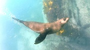20th Dec 2020 - Freediving with seals