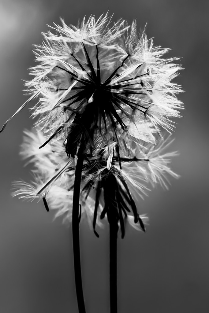 Light by sugarmuser