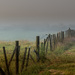 Fence in the fog by yorkshirekiwi