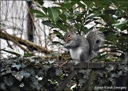 4th Jan 2021 - He was pleased that I had filled his nut box up