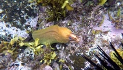 18th Dec 2020 - Moray Eel