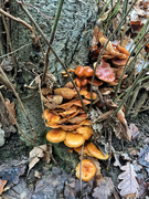 5th Jan 2021 - Mushrooms.