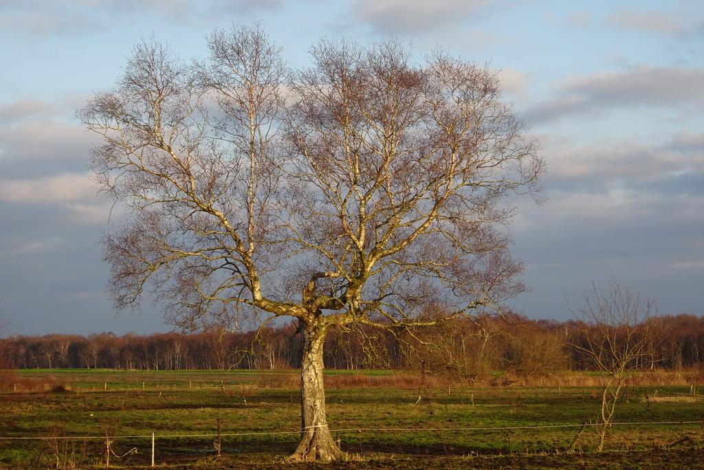 tree by gijsje