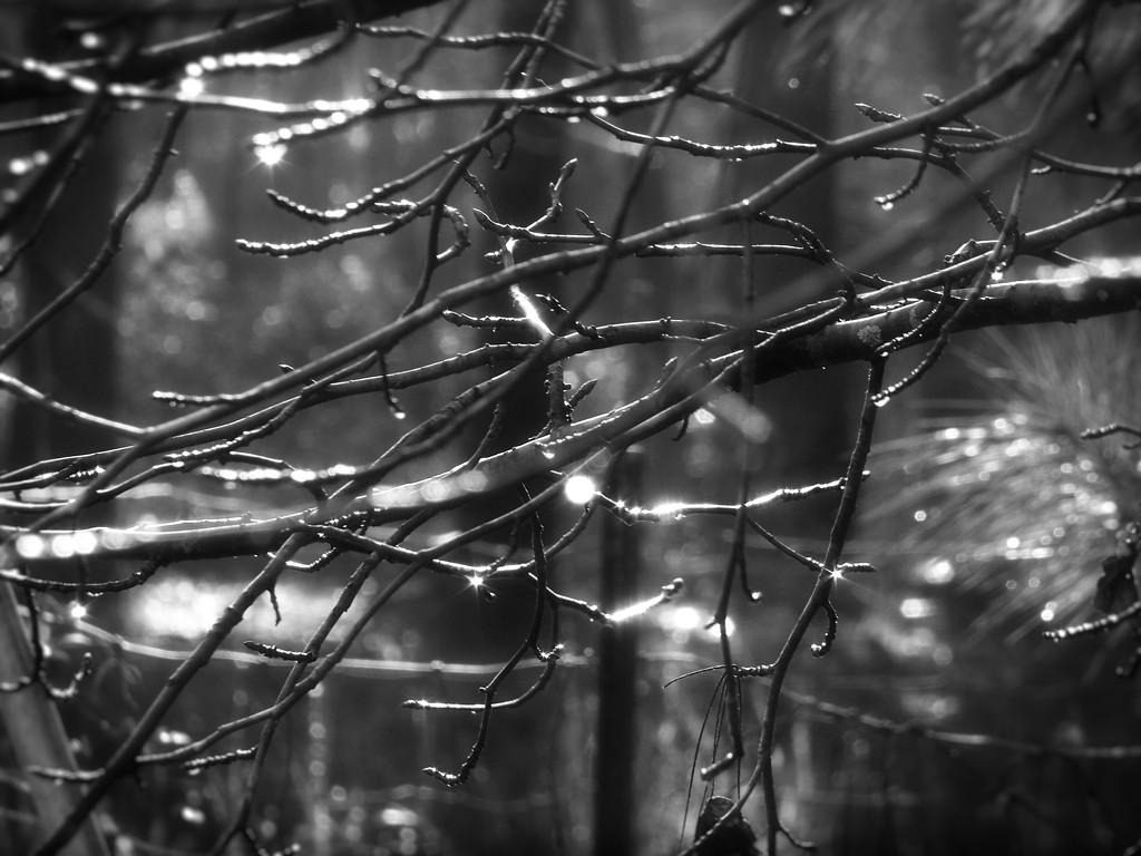 Rain drops and bokeh... by marlboromaam