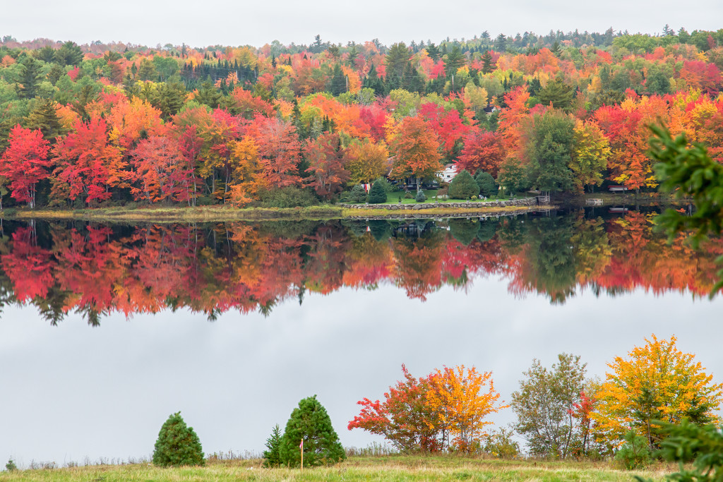 Fall colours by pamknowler