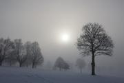 4th Jan 2021 - Morning Fog