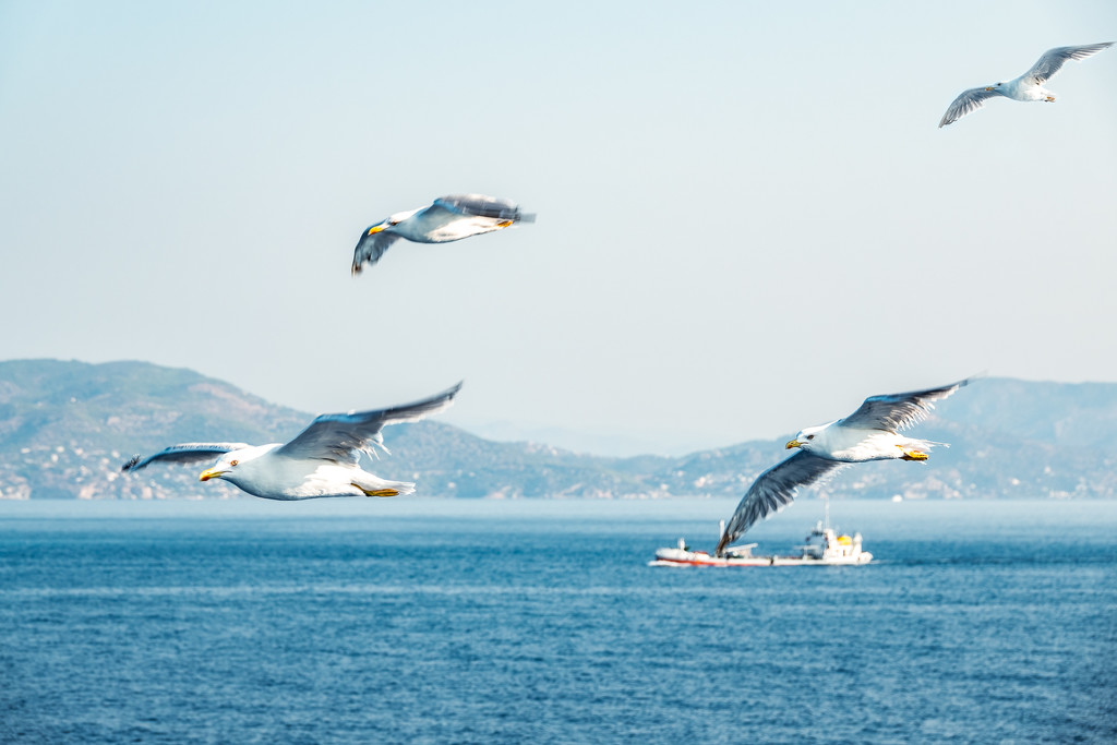 Birds of the Aegean Islands by jyokota