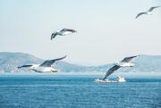 4th Jan 2021 - Birds of the Aegean Islands