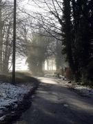 5th Jan 2021 - Morning sunlight