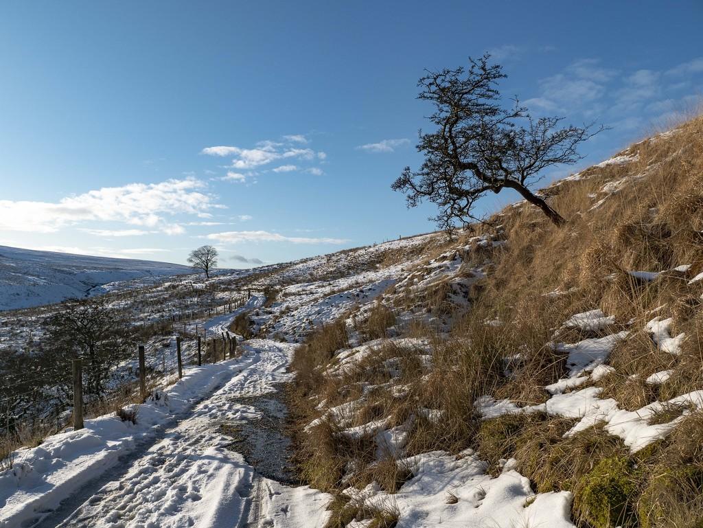 Moors Path. by gamelee