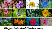 5th Jan 2021 - Ringve Botanical Garden