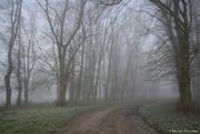 4th Jan 2021 - misty day