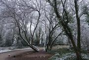 5th Jan 2021 - Trees at ease