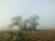 5th Jan 2021 - Misty shapes