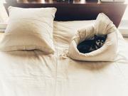 7th Jan 2021 - The pillow-sofa.
