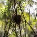 birds nest