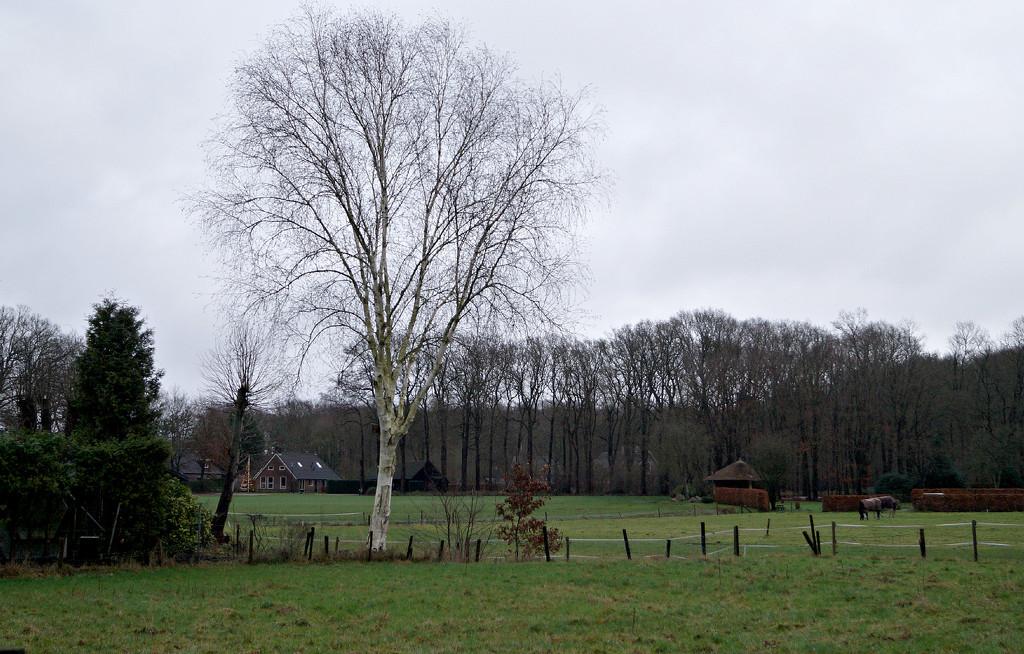 rural  landscape by gijsje
