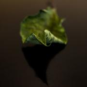 5th Jan 2021 - Poinsettia