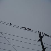 5th Jan 2021 - Bird Day