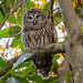 First Owl of the New Year! by rickster549