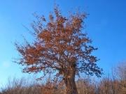 6th Jan 2021 - A tree
