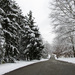 Tree lined street with snow by mittens