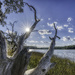 Intercoastal Waterway @ Skidaway State Park by kvphoto