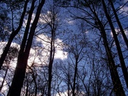 7th Jan 2021 - Winter sky over South Carolina...