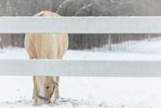 5th Jan 2021 - such a pretty horse