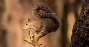 6th Jan 2021 - The Squirrel Posed Very Nicely!