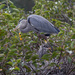 Heron with baby by dutchothotmailcom