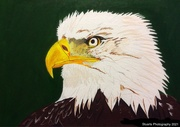 7th Jan 2021 - Eagles head