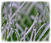 7th Jan 2021 - Frosty Morning