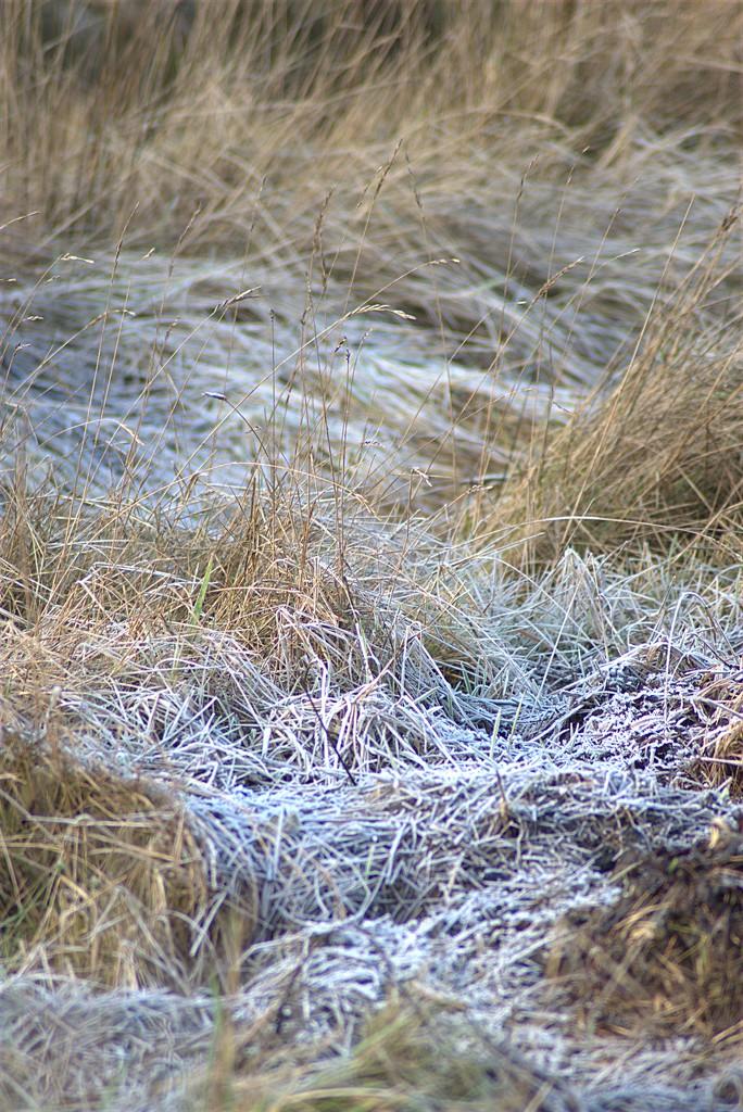 Frost by 30pics4jackiesdiamond