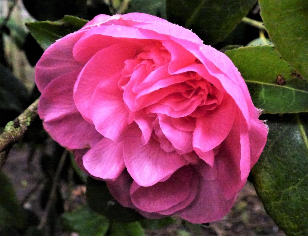 Early bloom by julienne1
