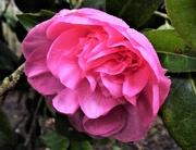 6th Jan 2021 - Early bloom