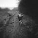 7th January. Run.
