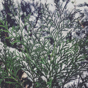 8th Jan 2021 - Some snow.