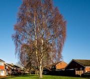 7th Jan 2021 - Village greens?