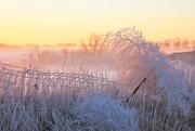6th Jan 2021 - A Lighter Shade of Morning