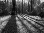 8th Jan 2021 - Morning shadows...