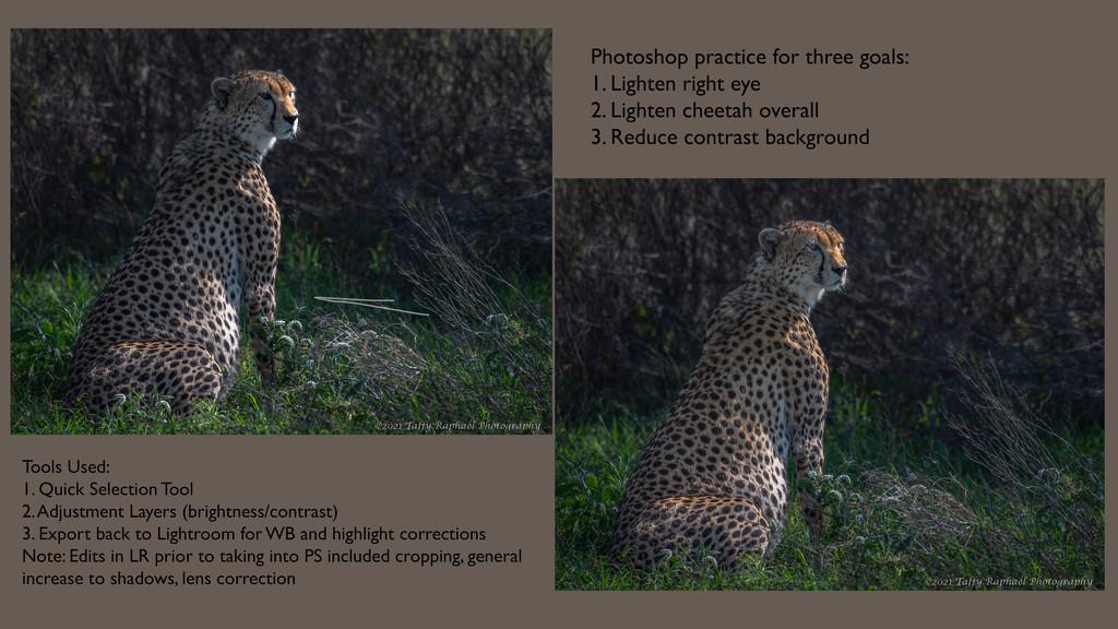 Cheetah Comparison by taffy