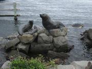 8th Jan 2021 - Seal family...